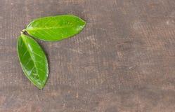 2 hojas verdes en la tabla, fondo de madera Imagenes de archivo