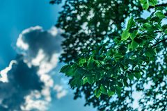 Hojas verdes en un día de verano brillante, contra un fondo del bokeh del cielo, de nubes, y de la luz del sol, Sleepy Hollow, en fotos de archivo