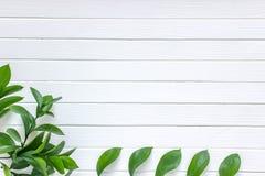 Hojas verdes en un fondo de madera blanco Lugar para el texto, visión superior fotografía de archivo libre de regalías