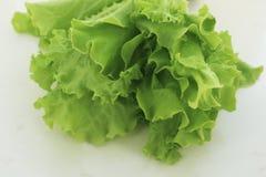 Hojas verdes frescas de la ensalada de la lechuga imagen de archivo libre de regalías