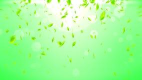 Hojas verdes frescas que caen en fondo verde Confeti de la hoja del CG Animaci?n del lazo stock de ilustración