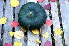 Hojas verdes grandes de la calabaza y de la caída al aire libre Foto de archivo