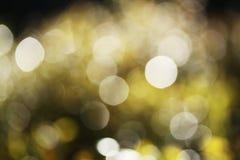 Hojas verdes, negras, blancas retroiluminadas de los árboles - fondo defocused del bosque del extracto de la chispa del fondo Fotos de archivo libres de regalías