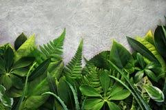 Hojas verdes tropicales del fondo exótico de las plantas foto de archivo libre de regalías