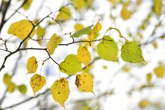 Hojas verdes y amarillas Foto de archivo libre de regalías