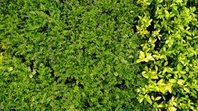 Hojas verdes y amarillas Imagen de archivo libre de regalías