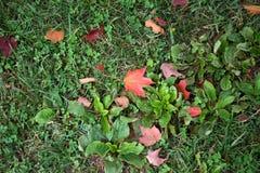 Hojas verdes y de la naranja fotografía de archivo libre de regalías