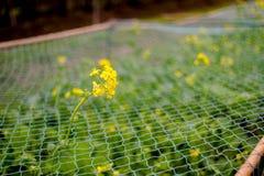 Hojas verdes y flor amarilla en cuarto de niños de la planta Foto de archivo