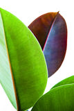 Hojas verdes y marrones Fotografía de archivo libre de regalías