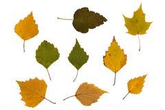 Hojas verdes y marrones secas Imagen de archivo libre de regalías