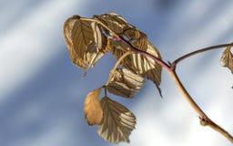 Hojas viejas en la primavera Fotografía de archivo libre de regalías