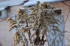 Hojas wisted invierno de la helada Fotos de archivo