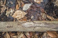 Hojas y árbol Fotografía de archivo