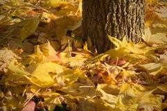 Hojas y árbol de otoño Imagen de archivo libre de regalías