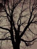 Hojas y árbol en otoño Fotografía de archivo