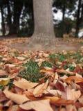 Hojas y árbol en otoño Fotos de archivo