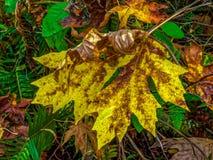Hojas y árboles de la caída fotografía de archivo libre de regalías