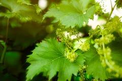 Hojas y abeja del verde Foto de archivo