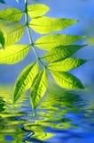 Hojas y agua del verde Imagenes de archivo
