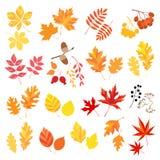 Hojas y bayas de otoño Fotos de archivo libres de regalías
