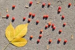 Hojas y bayas de otoño en el asfalto Imágenes de archivo libres de regalías