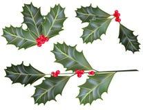 hojas y bayas del acebo Foto de archivo libre de regalías