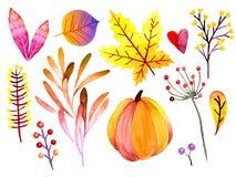 Hojas y bayas dibujadas mano del bosque de la acuarela Iconos aislados Ramas botánicas abstractas del otoño Guelder, calabaza Imagenes de archivo