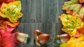 Hojas y bellota coloridas de la caída en el fondo de madera Foto de archivo libre de regalías