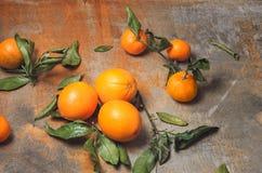 Hojas y cáscara del verde de la mandarina Fotografía de archivo libre de regalías