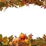 Hojas y calabazas aisladas de otoño en un fondo blanco Fotos de archivo