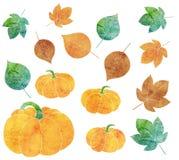 Hojas y calabazas coloridas Imagen de archivo libre de regalías