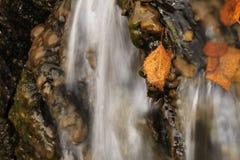 Hojas y cascada Fotos de archivo
