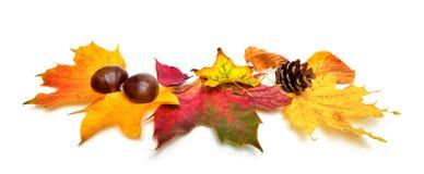 Hojas y castañas de otoño en blanco Fotos de archivo libres de regalías