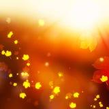Hojas y chispa de la magia de la caída en el brillo de Autumn Lighting Fotografía de archivo