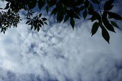 Hojas y cielo Foto de archivo libre de regalías