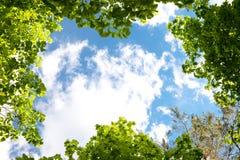 Hojas y cielo Imágenes de archivo libres de regalías
