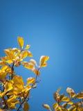 Hojas y cielo Foto de archivo