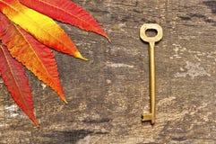 Hojas y clave Foto de archivo