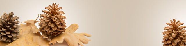 Hojas y conos de otoño Fotografía de archivo libre de regalías