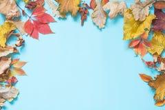 Hojas y espacio coloridos caidos de la copia en azul dinámico Visión superior Marco del otoño imagen de archivo libre de regalías