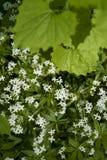 Hojas y flores blancas imagenes de archivo