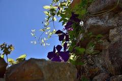 Hojas y flores de la planta que cuelgan contra el cielo azul foto de archivo