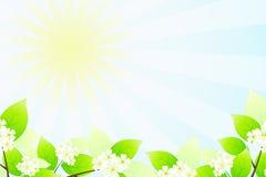 Hojas y flores del verde ilustración del vector