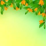 Hojas y flores foto de archivo