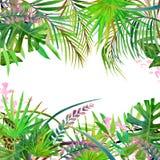 Hojas y flores tropicales Fotografía de archivo libre de regalías