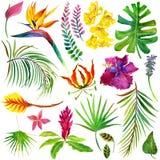 Hojas y flores tropicales Fotografía de archivo