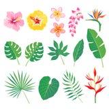 Hojas y flores tropicales Fotos de archivo libres de regalías
