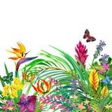 Hojas y fondo tropicales de las flores Imágenes de archivo libres de regalías