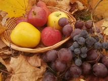 Hojas y frutas imagen de archivo