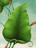 Hojas y Ladybugs del verde Imagen de archivo libre de regalías